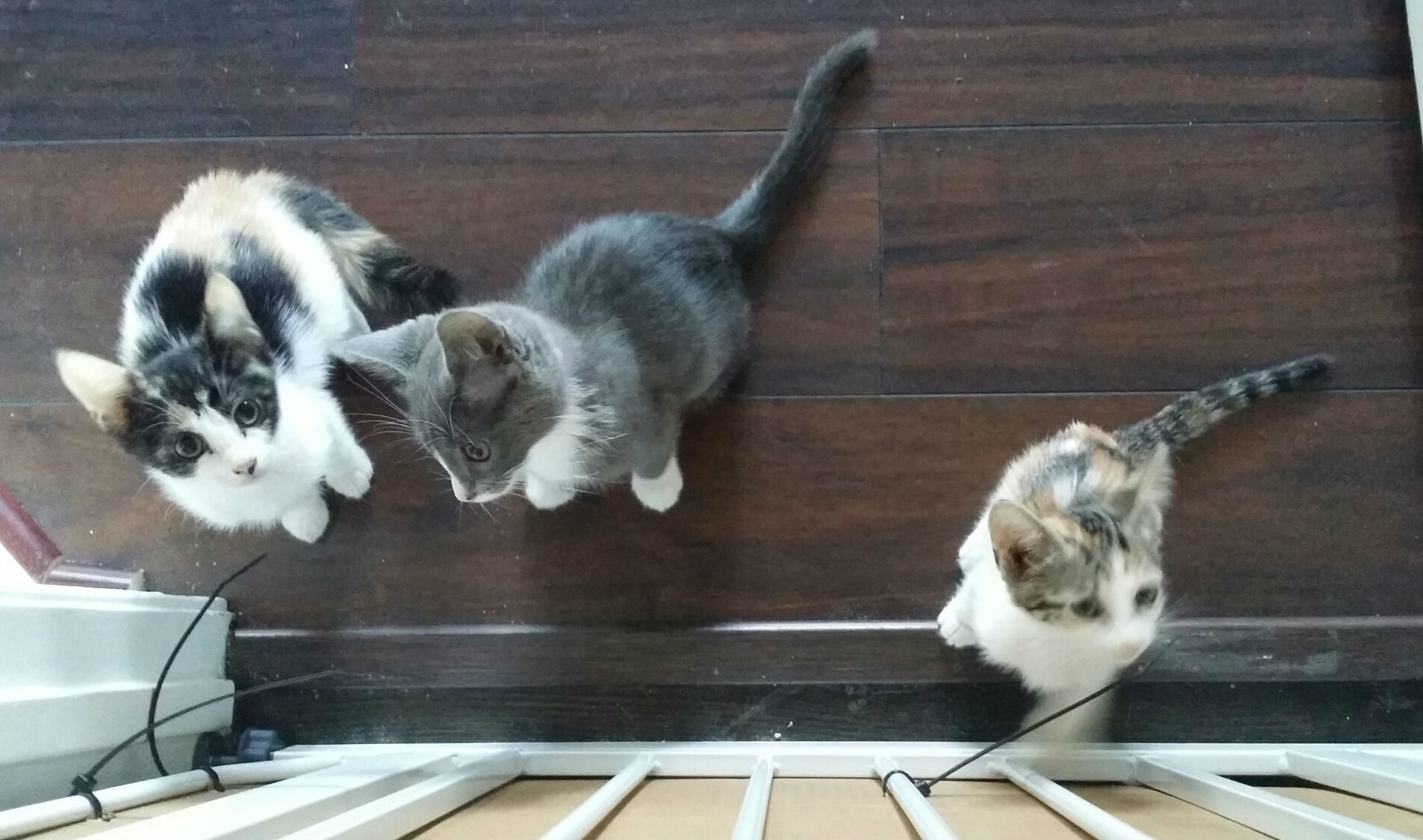 Foster Kittens - Special Pals