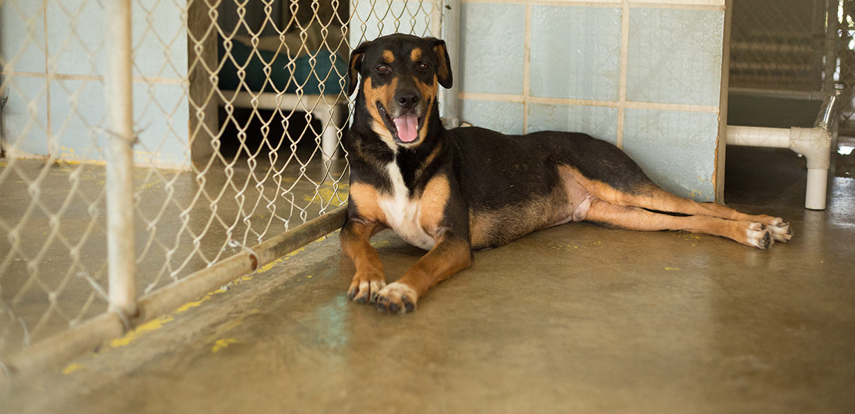 Special Pals No Kill Animal Shelter - Animal Rescue, Houston Katy Tx