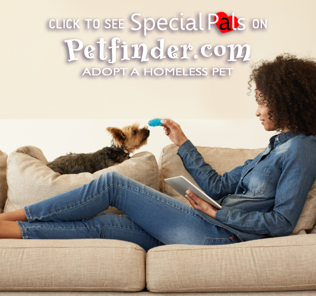 Special Pals Petfinder Yorkie Special Pals Shelter