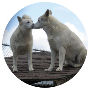 Year of the Dog - Arctic & Blanco - Special Pals Shelter, Houston TX