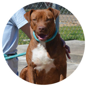 Year of the Dog - Pippa - Special Pals Shelter, Houston TX