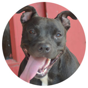 Year of the Dog - Poppy - Special Pals Shelter, Houston TX