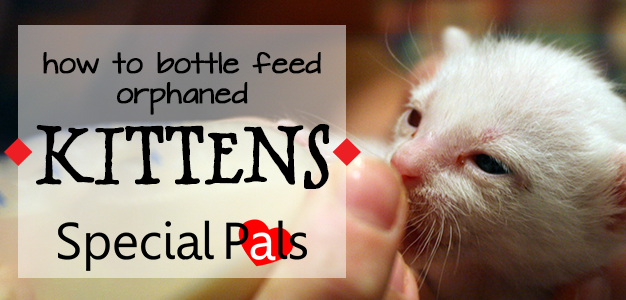 How To Bottle Feed A Kitten - Special Pals