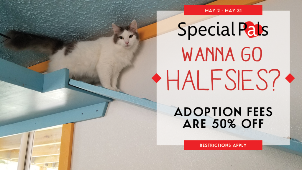 Special Pals - May 2018 Half off Adoption Fees