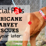 Hurricane Harvey Rescues - Special Pals No-Kill Shelter, Houston