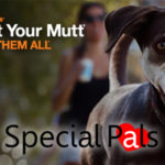 Strut Your Mutt Walk Houston 2018 - Special Pals