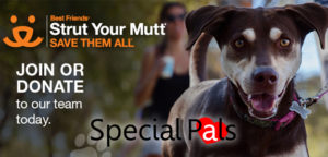 Strut Your Mutt 2018 Walk with Special Pals @ Stude Park | Houston | Texas | United States