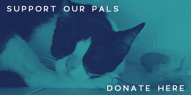 Special Pals Rescue Resource Center - Donate